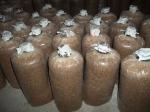 baglog jamur tanpa kontaminasi